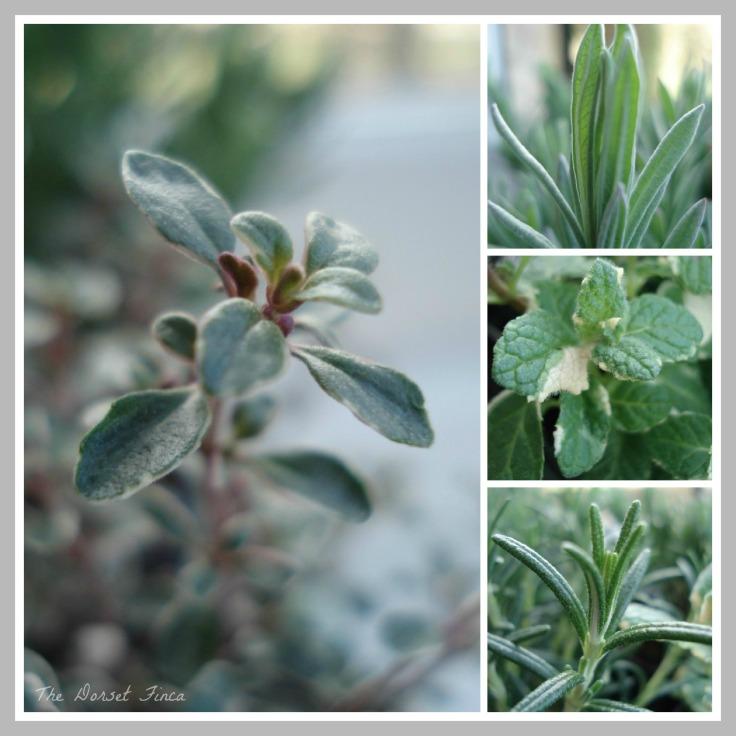 herb garden re-stock