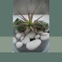 Houseplants | Terrariums | Plant Design