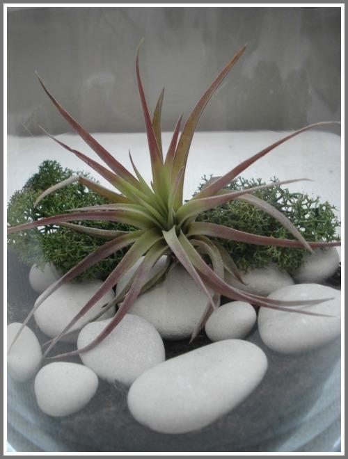 Springtime terrarium