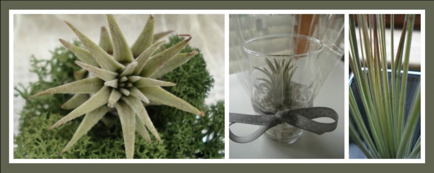 Air Plants Slider