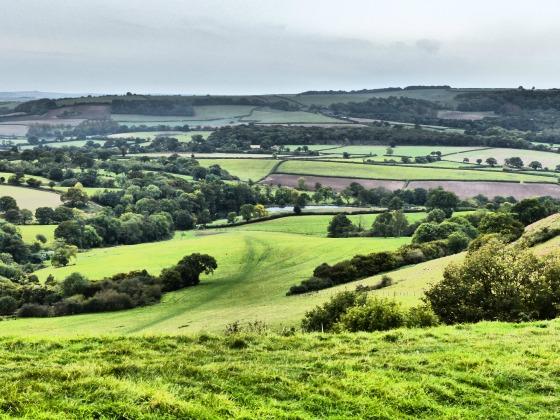 bulbarrow view 1