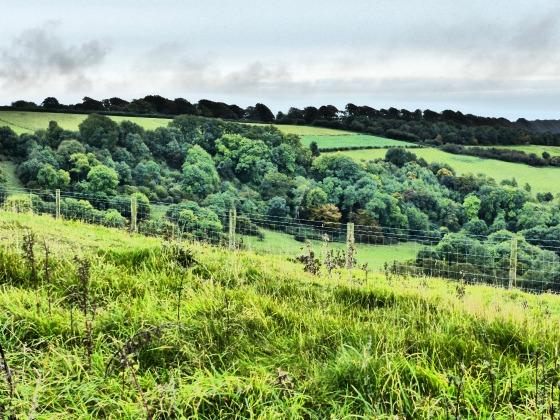 bulbarrow view 3