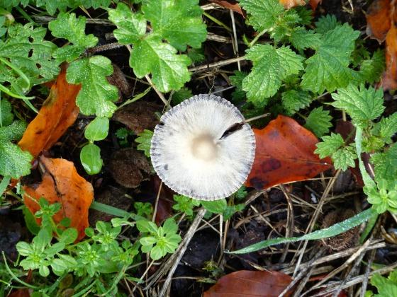 round mushroom