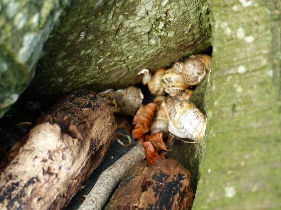 snails hiding