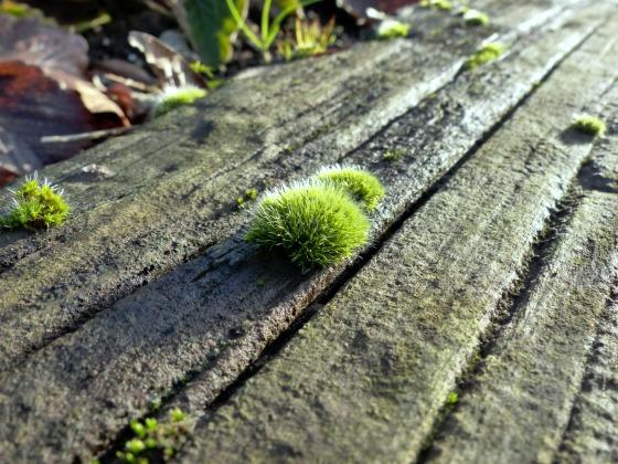 moss on sleeper