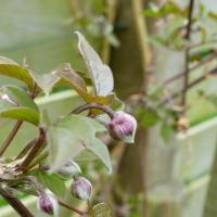 Spring Garden Update | Going Green!