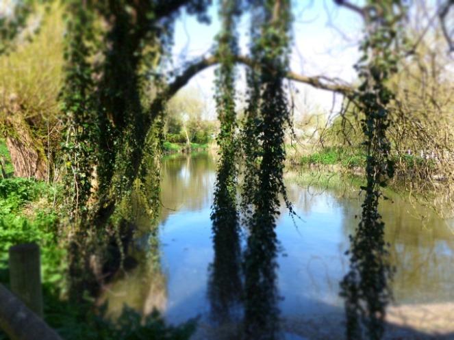 view through trees Sturminster Mill Dorset 142kB