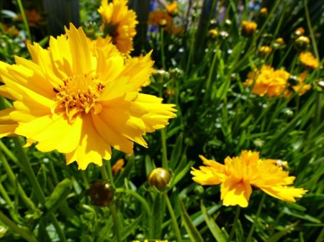 Colour at Cranborne Garden Centre