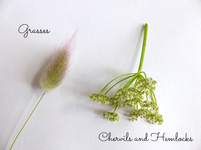 grasses and chervils