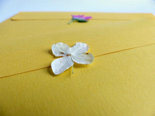 hyrdangea envelope seal