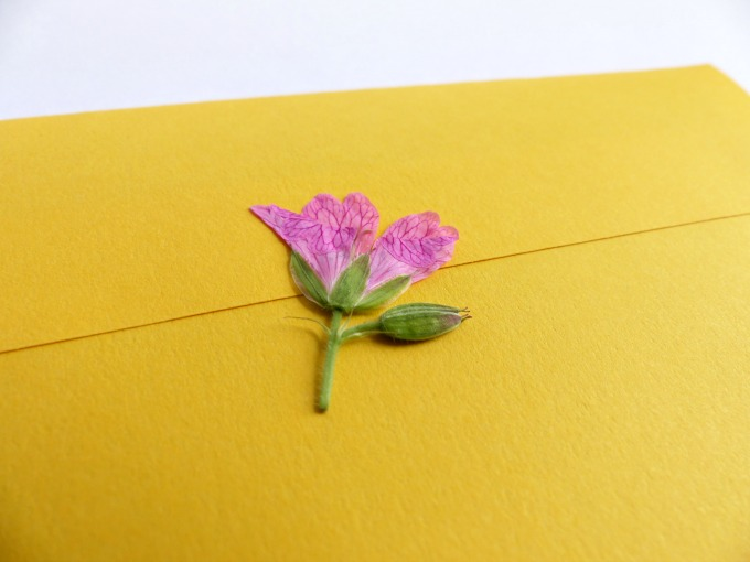 pressed wild flower envelope seal