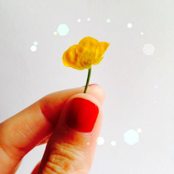 tiny buttercup