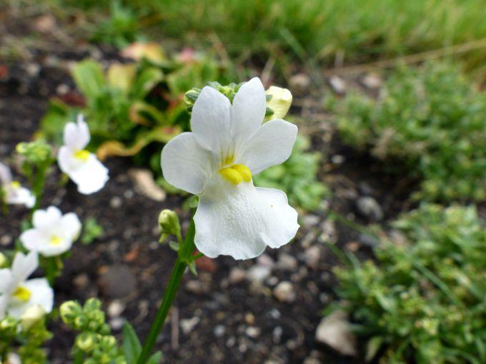 vanilla scented flowers