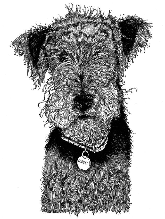 Pet portrait Brinkley
