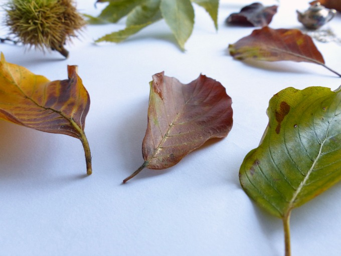 autumn collection of leaves