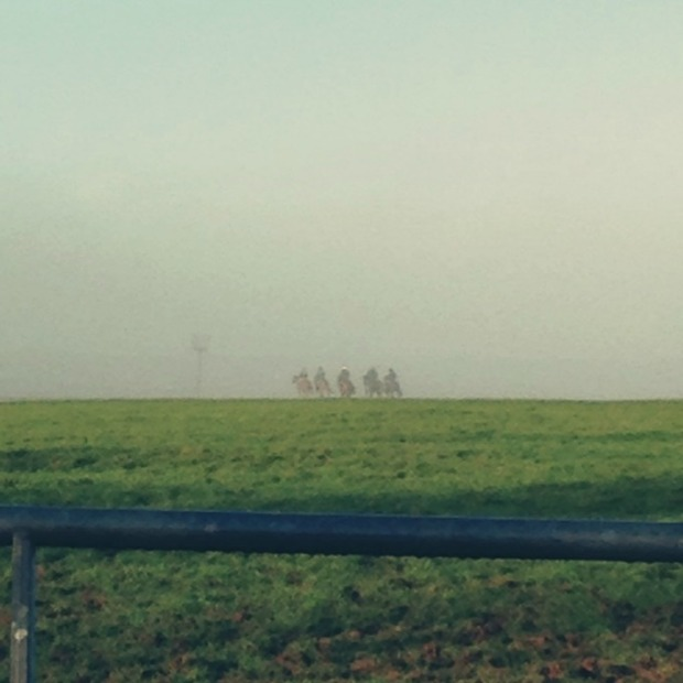 race horses on the gallops