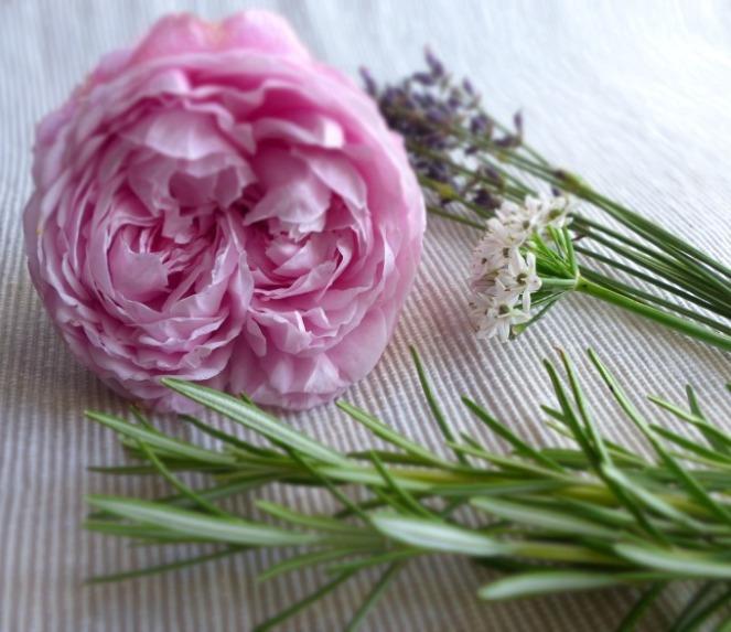 generous gardener david austin rose