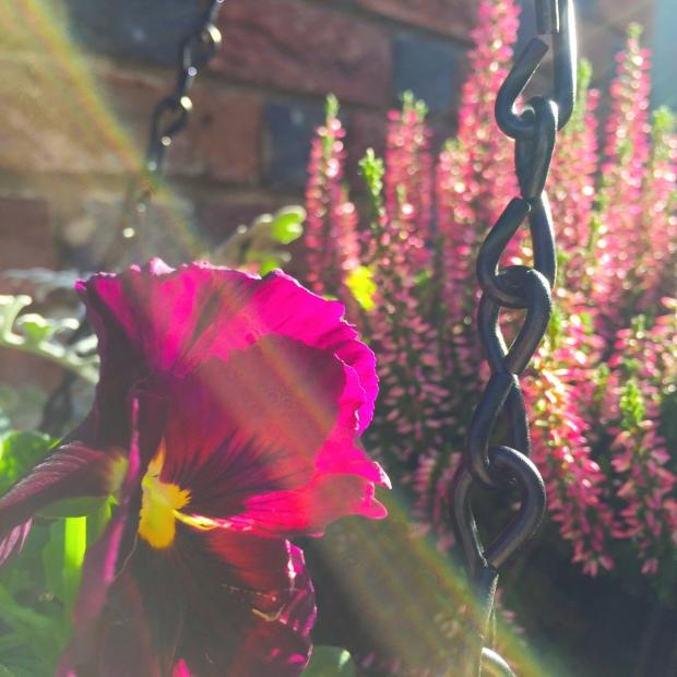 autumn hanging basket close up