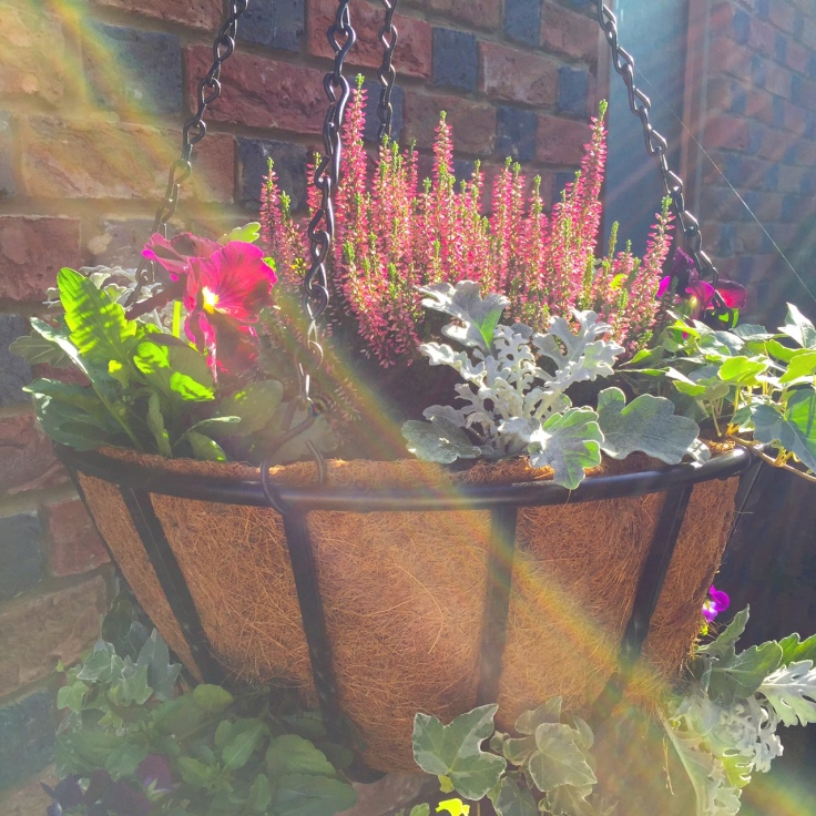 autumn-hanging-basket-2