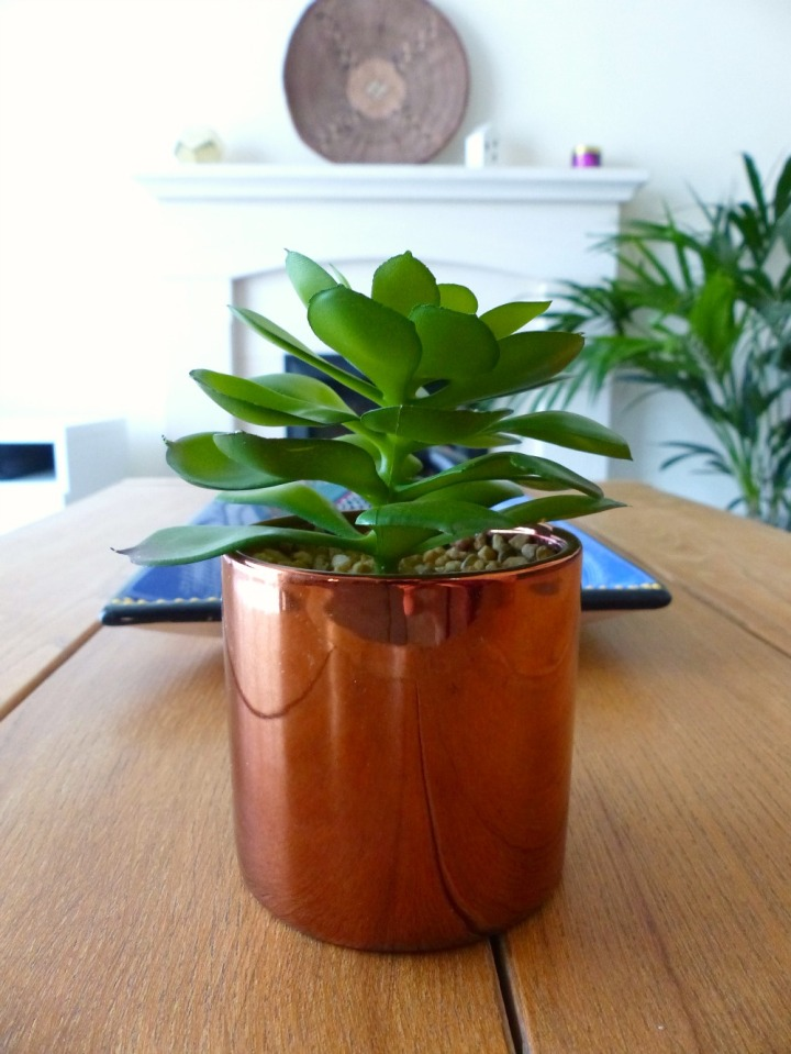 succulent in copper pot