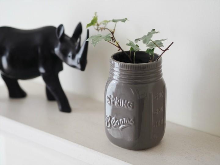 my free houseplant variegated ivy