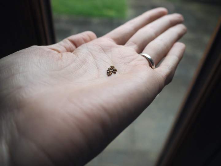 rosemary seeds on my palm