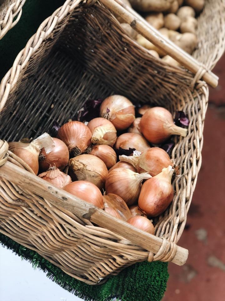 organic-onions